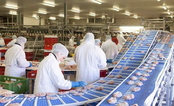 Helper m/f/d – in poultry production